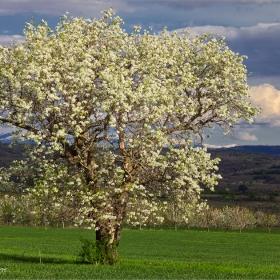 дървото на желанията... :)