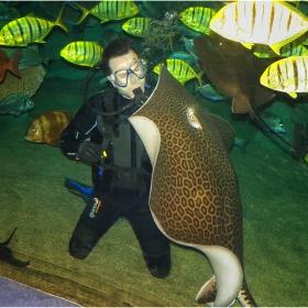 Подводни приятели!