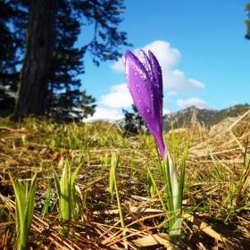 Пролетта дойде и на Ситняково!
