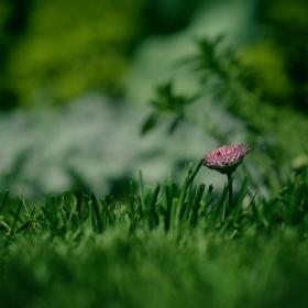 в тревата