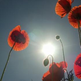 Срещу слънцето