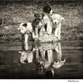 Пазачите на езерото