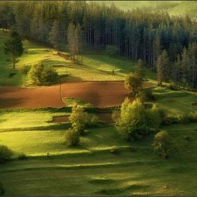 Мека светлина огря цялата гора