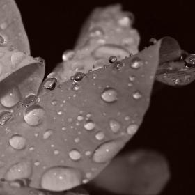 Дъждовно...!