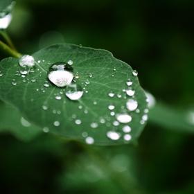 перлен...дъжд