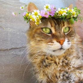 Платена поръчкова фото сесия на котка. Поръчител Ива:D
