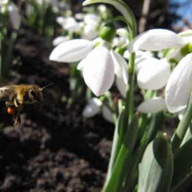 Пчеличката Мая....