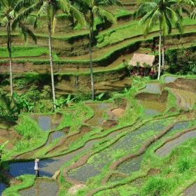 Оризовите тераси на Бали