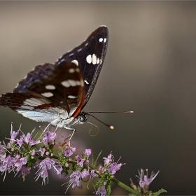 Просто...пеперудено