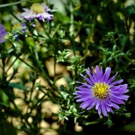 Цвете от градината на баба :)