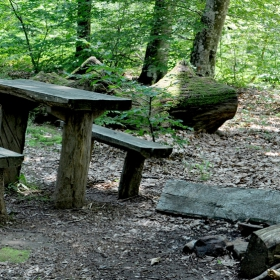 Добре дошли в гората (Местност