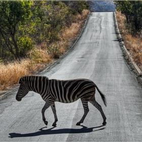 Пресичне на зебра - правилното пресичане