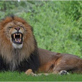От Лъвчо с любов за всичките му почитатели!