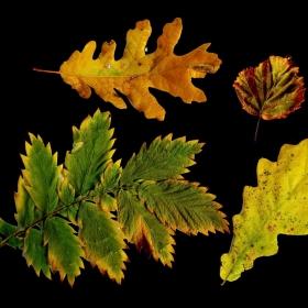 Есенни спомени...