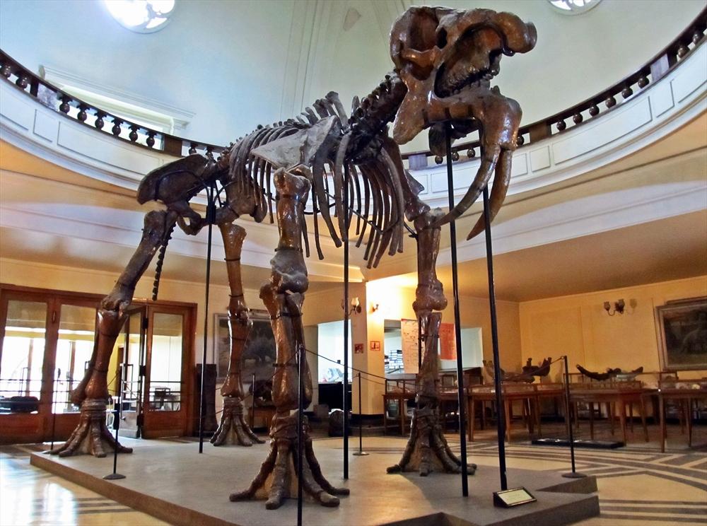 Скелет на Динотериум