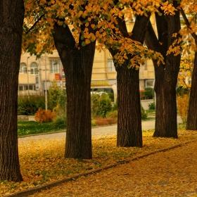 Из есенна София