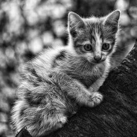Защо котките са сиви?