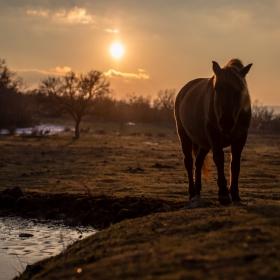 Дивите коне на Източни Родопи