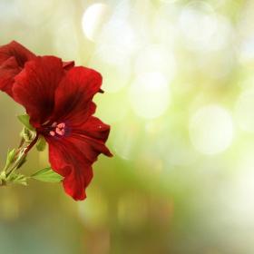 Шаренко за  цветни сънища:)