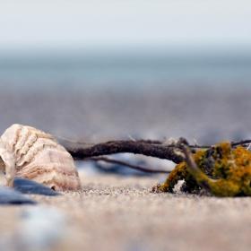 февруарски бряг