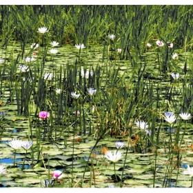 Лилиите в блатата край Нил