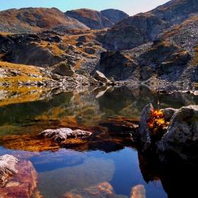 Еленино езеро и цветето...