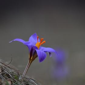 цветна пролет - без обработка