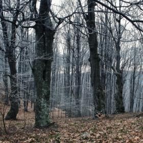 Заскрежената гора! /мартенско време/