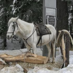 Зимен Боровец... Аз чакам, чакам вече час премръзнал на снега...