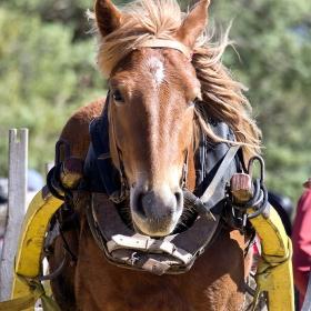 Портрет на един кон