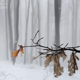 Есен по никое време