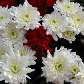 Да стоплим душите си с цвете...4