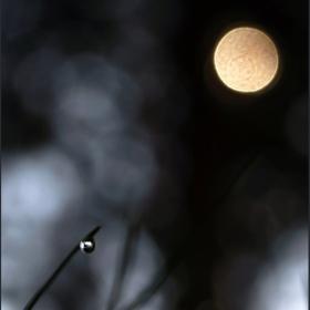 Слънчев диск