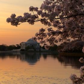 Cherry Blossom и Мемориалът на Джеферсън - утринно-портретно