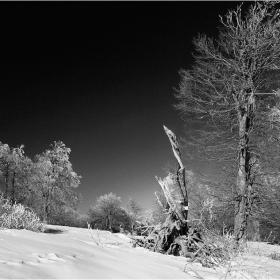 Зима в Стара планина - местност Узана (Любимецът на гръмотевиците)