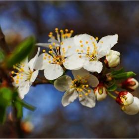 Пролет е!