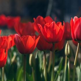 пролетни усмивки..:)