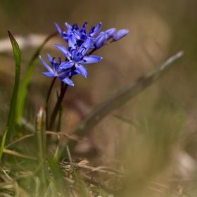 Витошка пролет