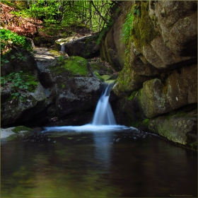 Поток в гората