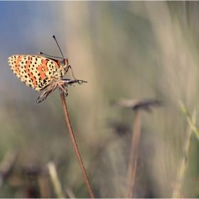 Сезонът на пеперудите-3