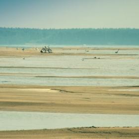 ...самотни плажове...и диви лебеди...