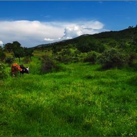 Тучни поляни в Родопите