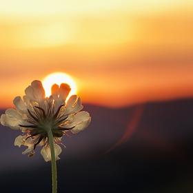 Добро утро, Слънце!
