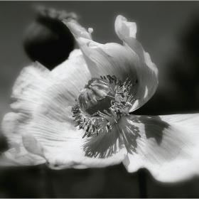 И цветята тъгуват понякога!