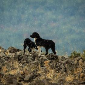 rainy dogs