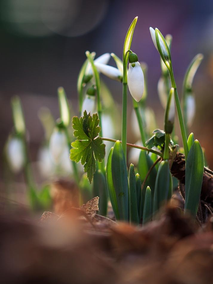 Пролет посред зима
