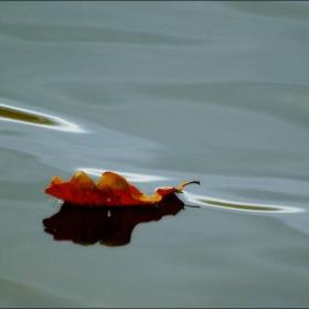 Осенний листик.