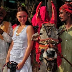 Индия - страната на канонизираните крави.