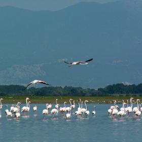 Фламингите 2