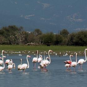 Фламингите 3